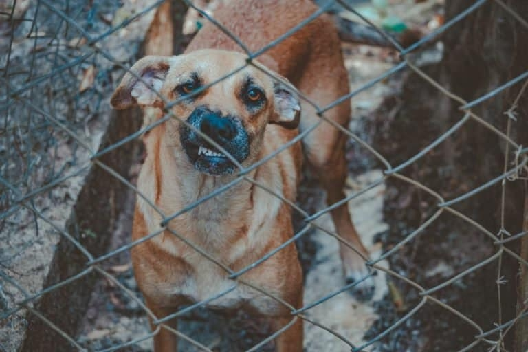 Penalties And Laws For Animal Abuse – Federal Crime