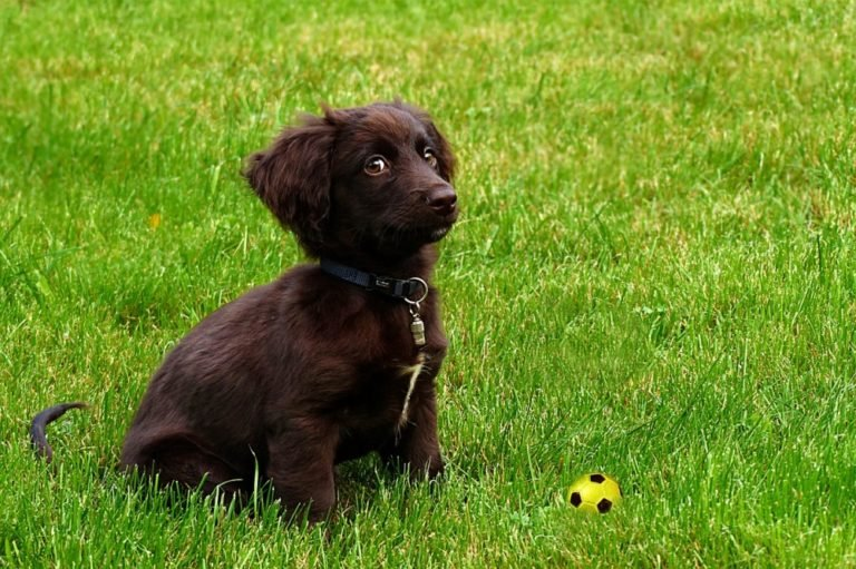 Extensive Puppy Guide: How To Train And Keep A Puppy Safe