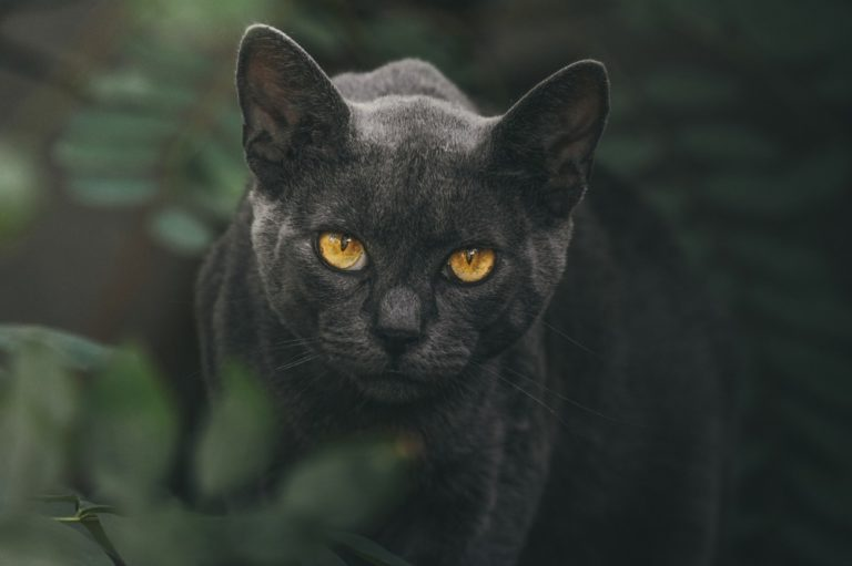 Most Common Diseases In Cats