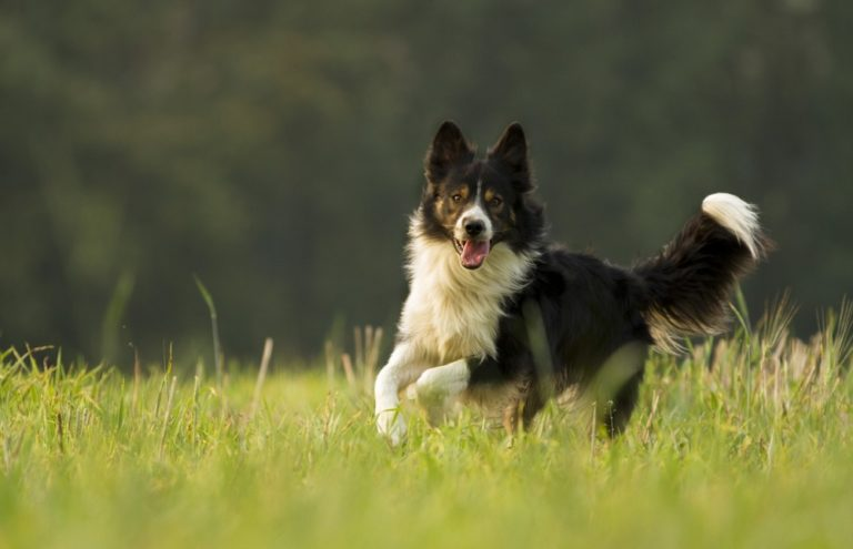 Extensive Guide: How to Properly Train an Adult Dog