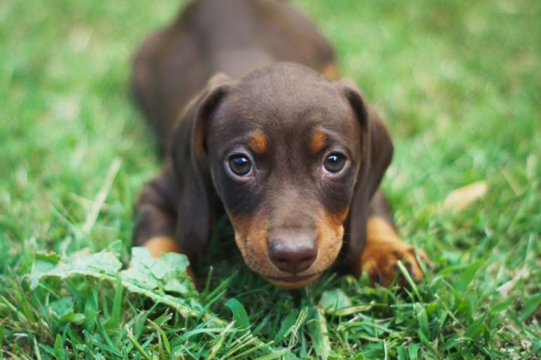 12 Important questions to ask A Dog Breeder