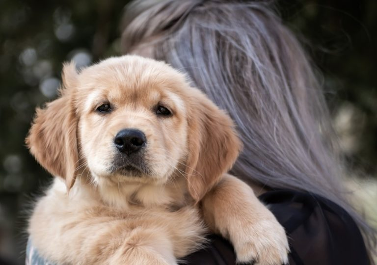 Tips To Overcome Separation Anxiety In Dogs