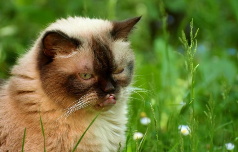 Skin And Hair Diseases In Cats