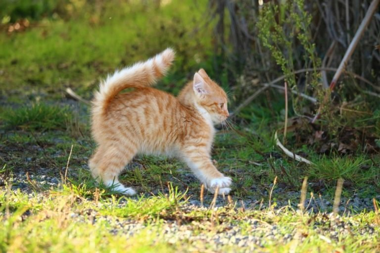 Digestive Problems In Cats