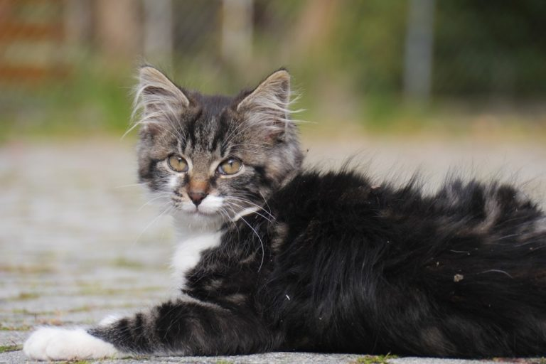 Loss Of Appetite In Cats