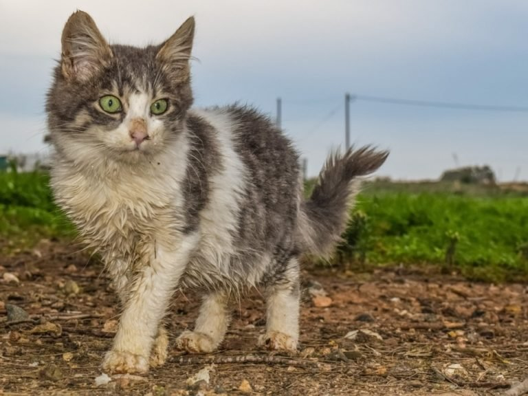 Lack Of Hygiene In Cats