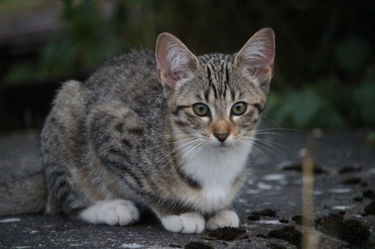 How To Eliminate Fleas And Ticks On Cats