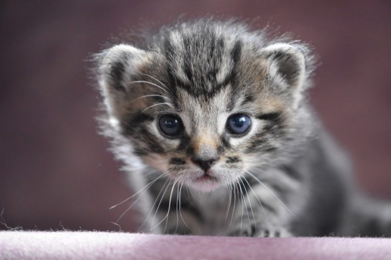 10 Questions To Ask A Cat Breeder