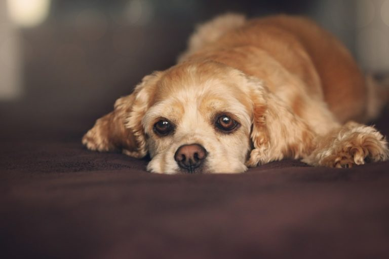 My Dog Is Afraid Of Fireworks: What Can I Do?