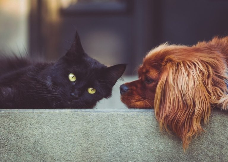 Should You Get A Dog Or A Cat?