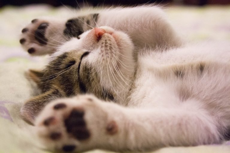 Diarrhea In Kittens What You Should Know