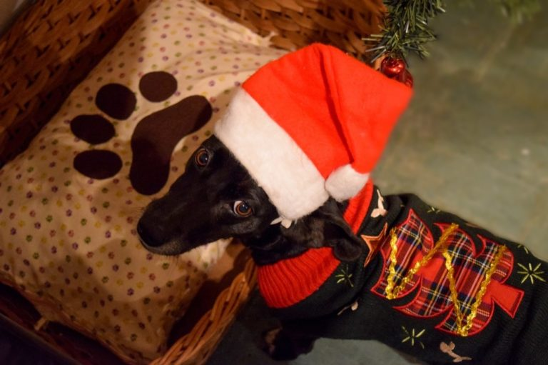Is Giving A Dog For Christmas A Good Idea? Long-Term Commitment