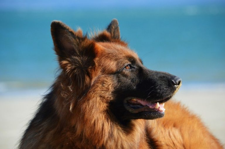 How To Reduce Excessive Shedding Of Dog Hair