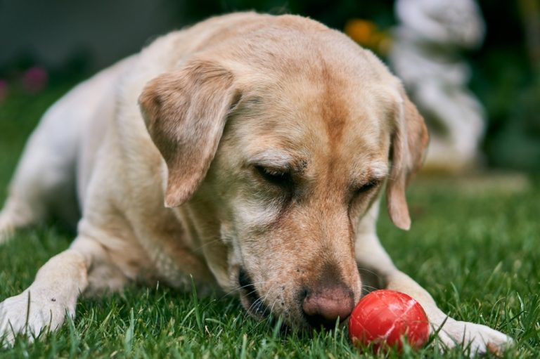 What Fruits And Vegetables Can Your Dog Eat?