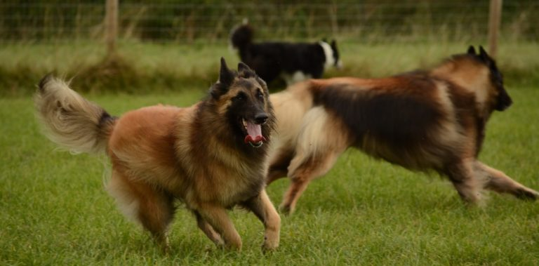 How Much Exercise Does A Dog Need Per Day?