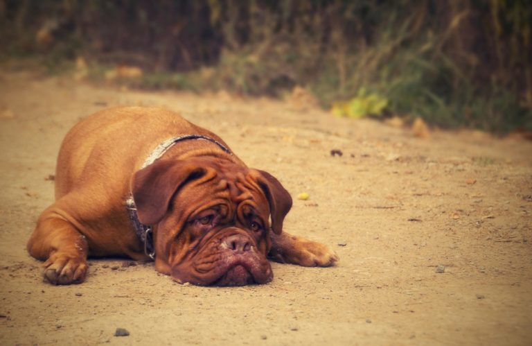 Bad Dogs Or Bad Pet Owners – Aggression – Selfishness – Bad Behavior