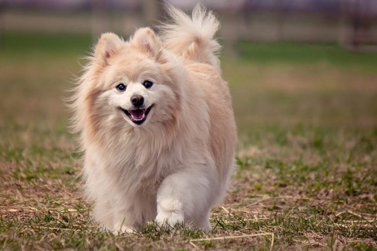 13 Best Dog Breeds That Live The Longest