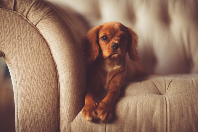 Poisoning in Dogs – Symptoms and Treatment
