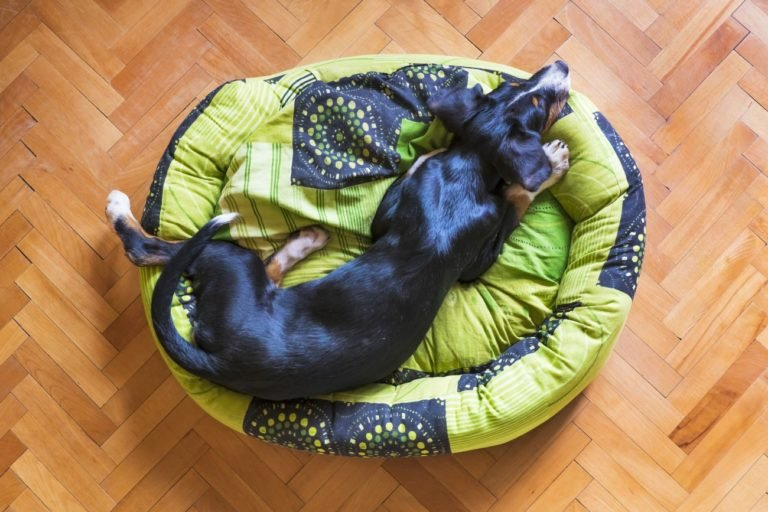 Is it good to sleep with my dog - How To Make Your Dog Sleep In Their Bed