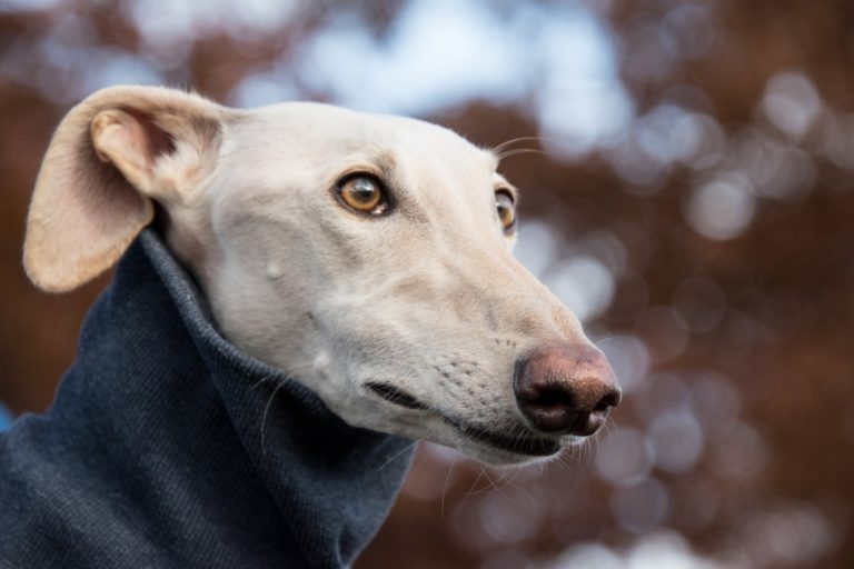 Top 9 Calmest Dog Breeds With Easy Going Personalities