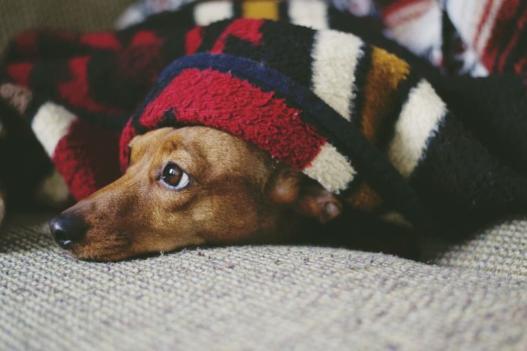 How to prepare a dog for the arrival of a baby